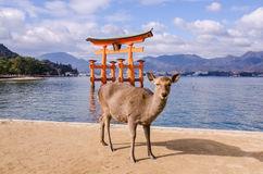 un-grandi-portone-e-cervo-di-torii-miyajima-giappone-37366153