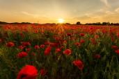 olli_warm-flower-garden_ykvjrme.jpg.jpeg