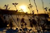 elin-lind_sunshine-in-this-cold-day_ykdkrwm.jpg.jpeg