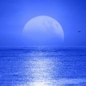 maxim-raynal_moonrise_ykrkqmm.jpg.jpeg